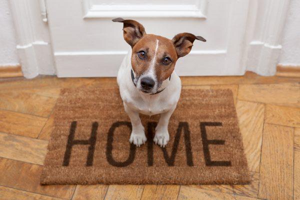 best flooring for homes